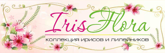 Ирис-Флора